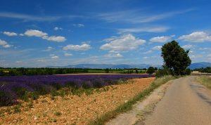 Die Provence ist ein beliebtes Reiseziel in Frankreich-Entlang der Lavendelfelder auf der Landstrasse