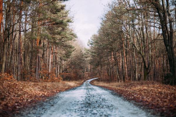 Autofahren im Herbst wird durch Laub und Nasse Straßen zur Herausforderung